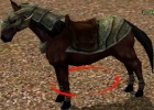Metin2: How to Get a Horse