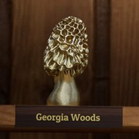 Morels: The Hunt Golden Morels and Collectibles Guide