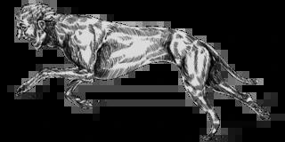 Hunt: Showdown 1.5.1 Traits Tier List Guide